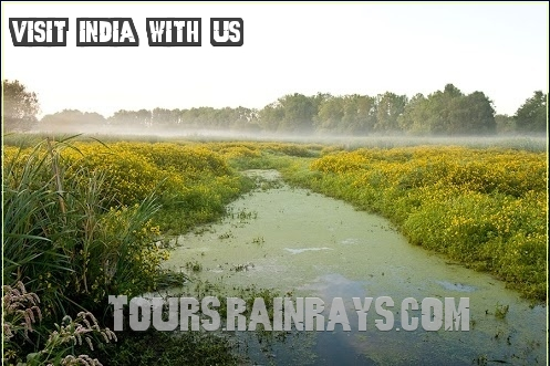 travel deals packages India | tours from india | a trip to india