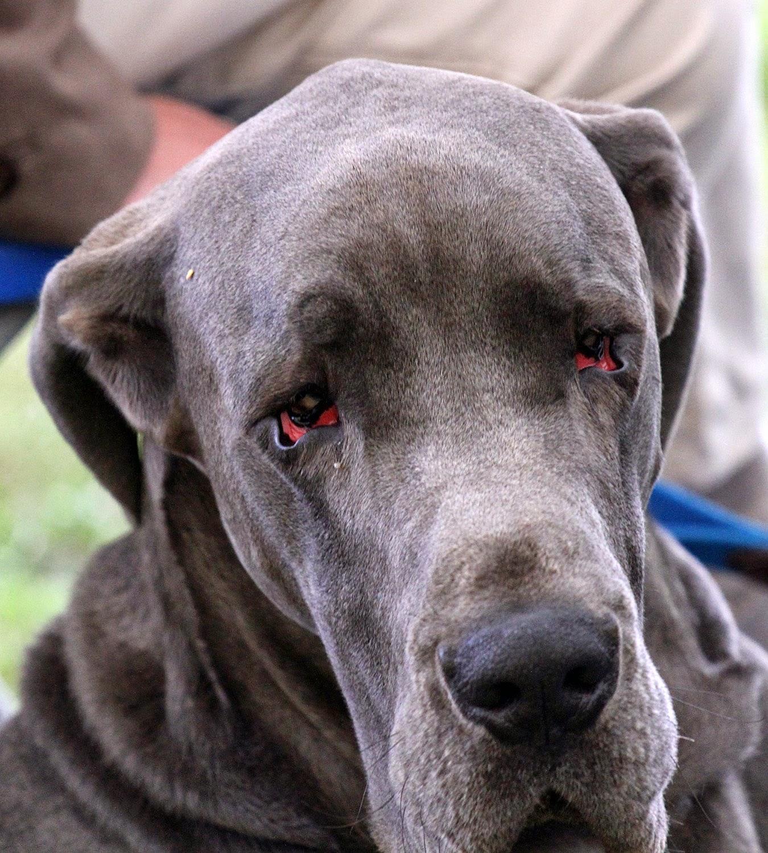 Dark Grey Dog Names
