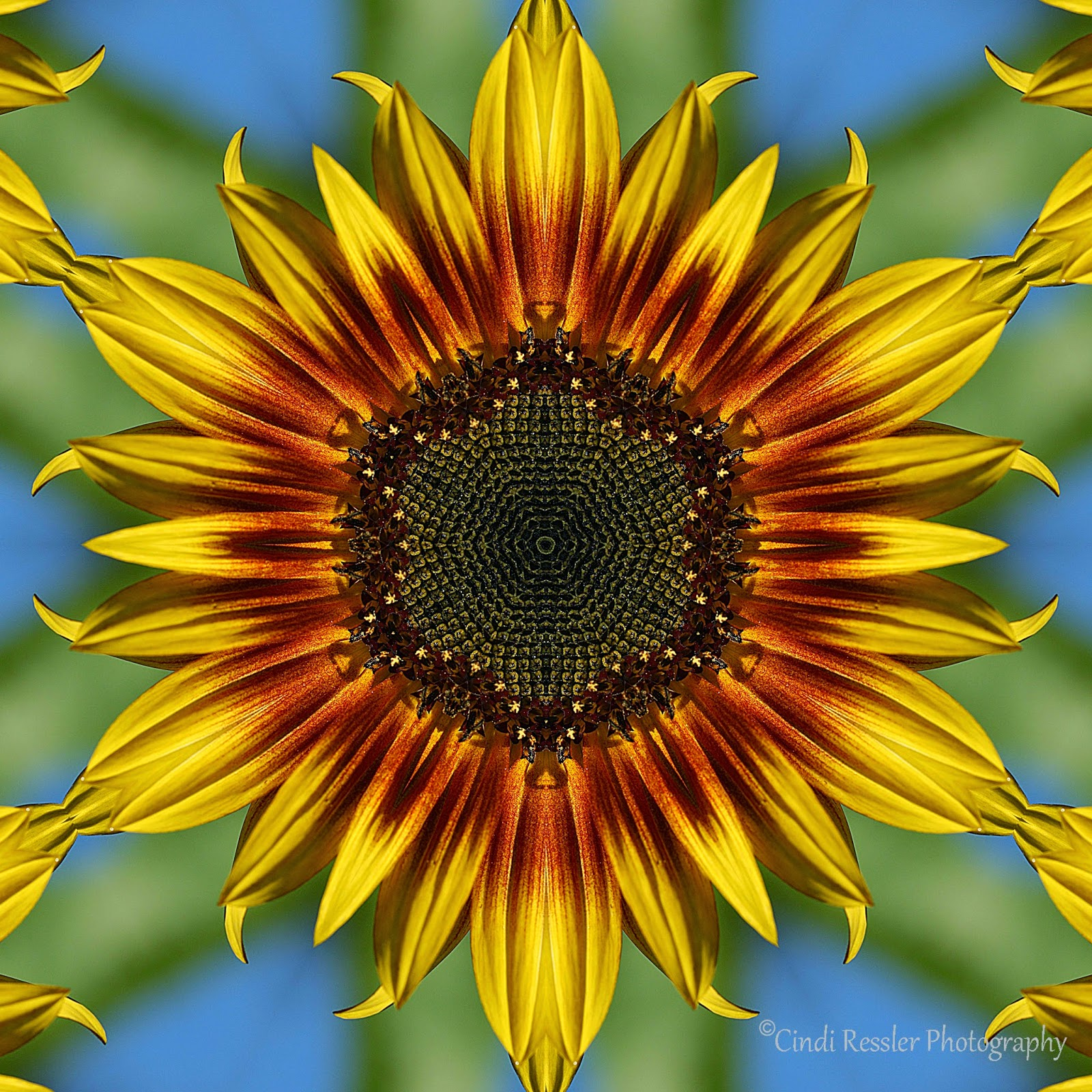 http://fineartamerica.com/featured/sunflower-kaleidoscope-cindi-ressler.html
