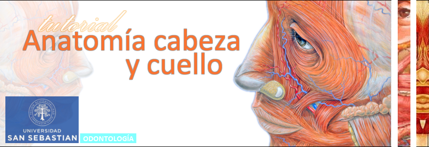 Tutorial Anatomía Cabeza y Cuello