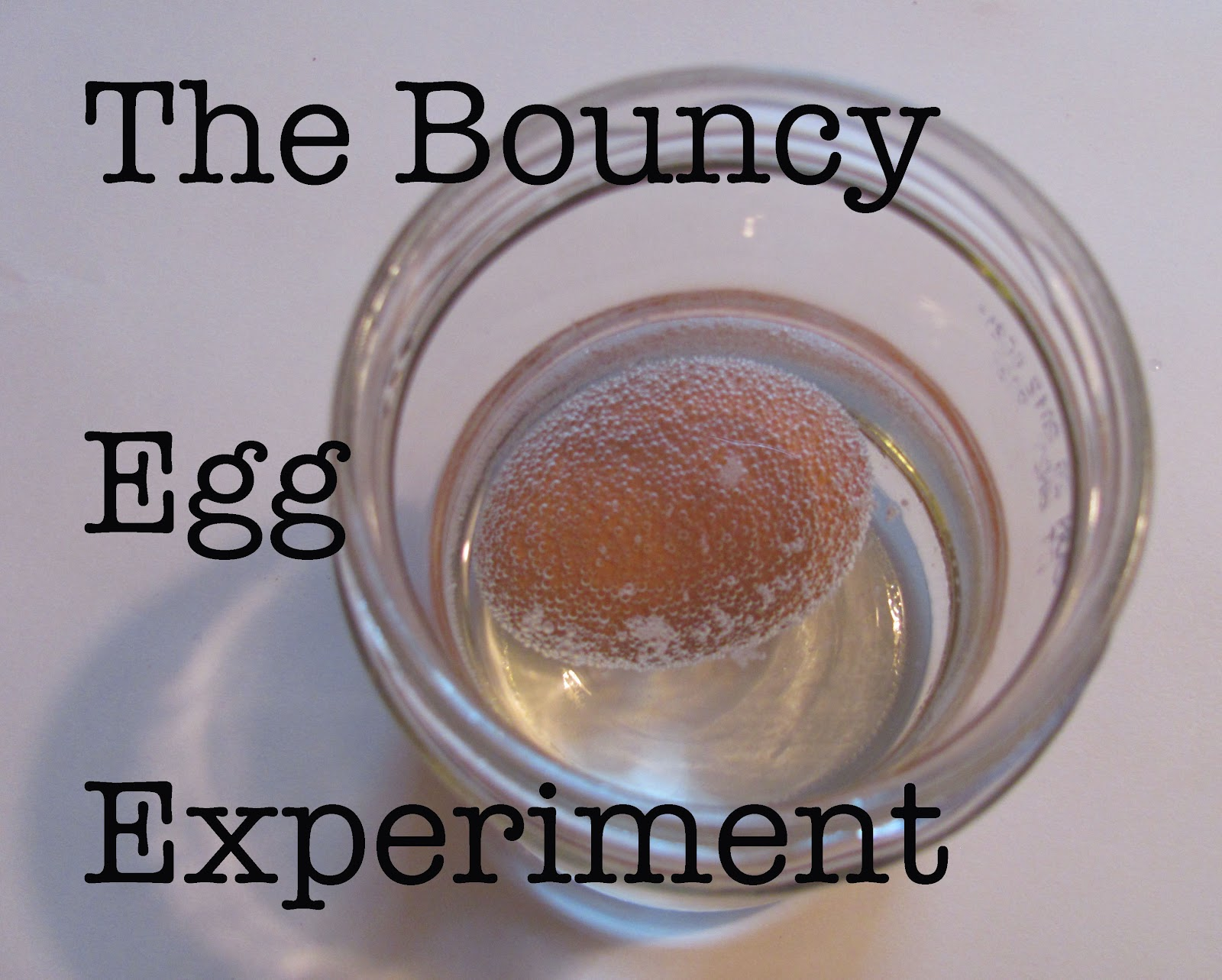 bouncey egg experiment Tall, tender, light, fluffy, super soft, squishy yet bouncy, stringy and flavorful  cup  combine together the milk, egg, melted butter and the cooled tangzhong  i  would honestly encourage you to experiment with this idea.