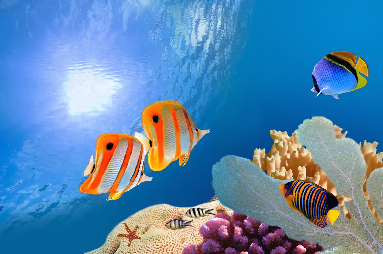 30 protectores de pantalla en 3d de acuarios peces y del for Peces de acuario