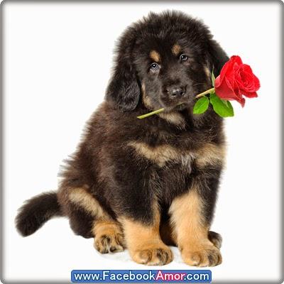 fotografía de lindo perro para perfil de facebook