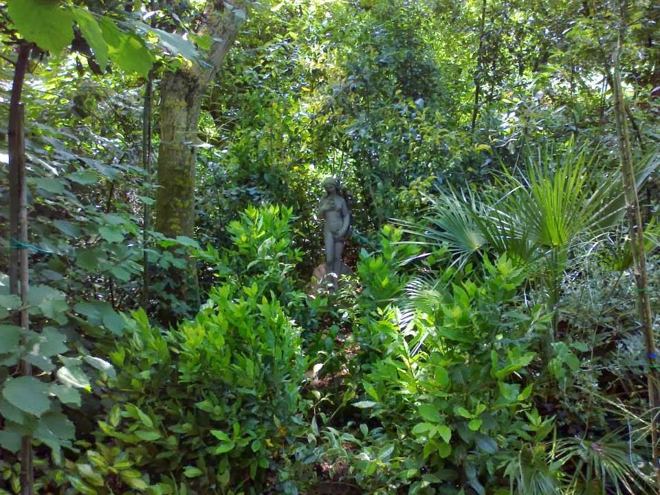 il bosco pittoresco