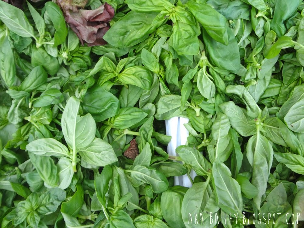Fresh basil at Kitsilano Farmers Market in Vancouver