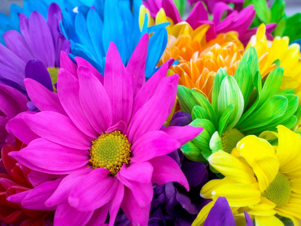 Fabulous Colorful Flowers 1024 x 768 · 79 kB · jpeg