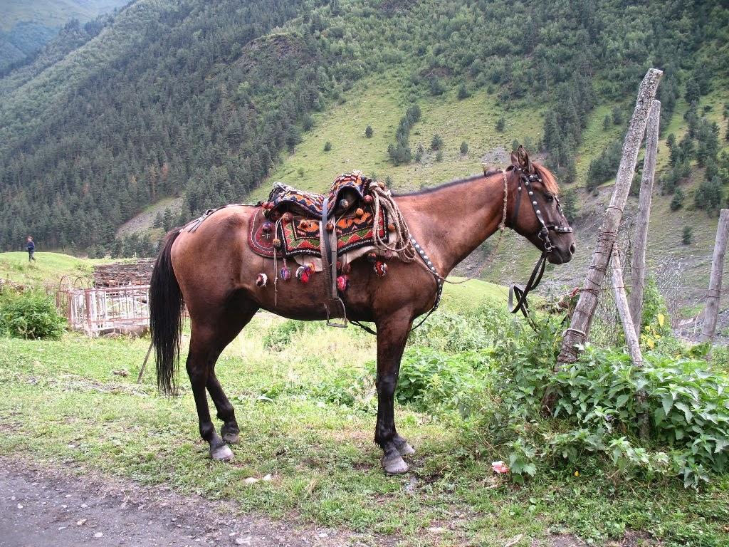 タッシュティの馬