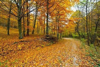 Los paisajes paisajes naturales for Arboles de hoja perenne para clima frio