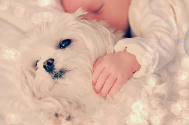 lots of snuggles dog and baby sleeping together cute picture