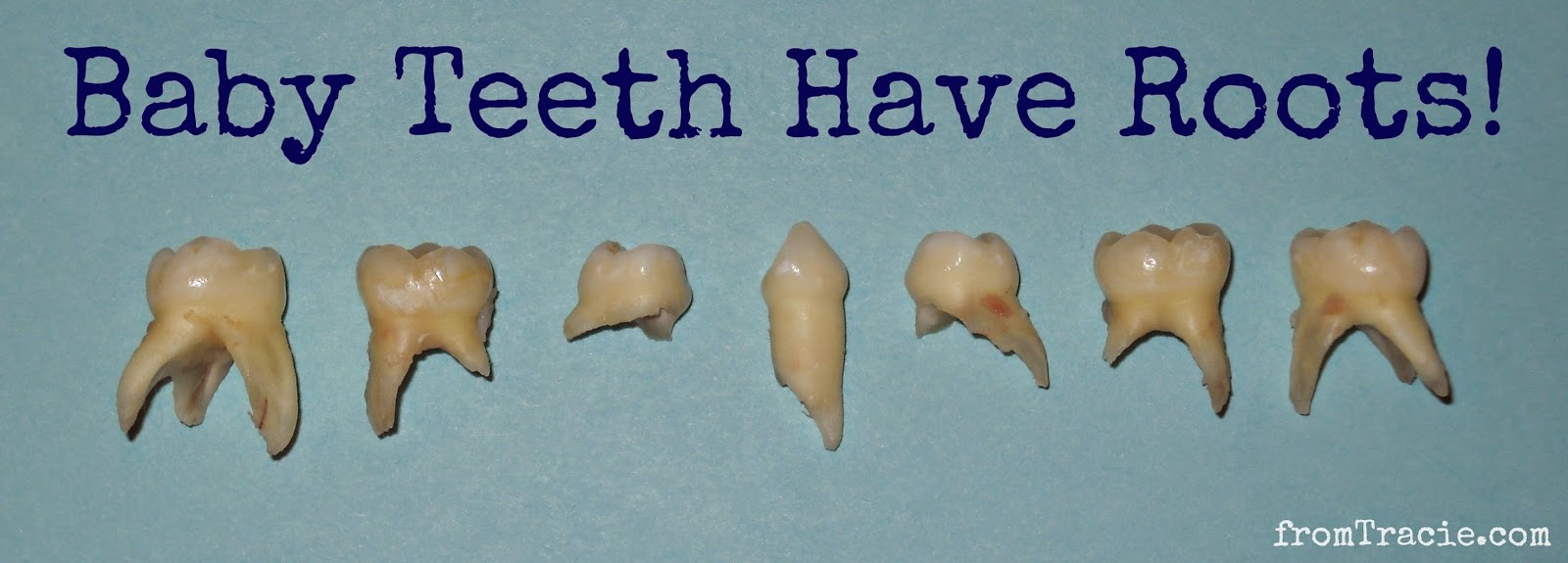 Baby Teeth Have Roots