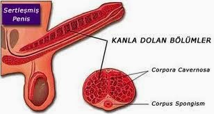 sperm artirici bitkisel ilaзlar