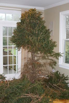 pruned Christmas tree