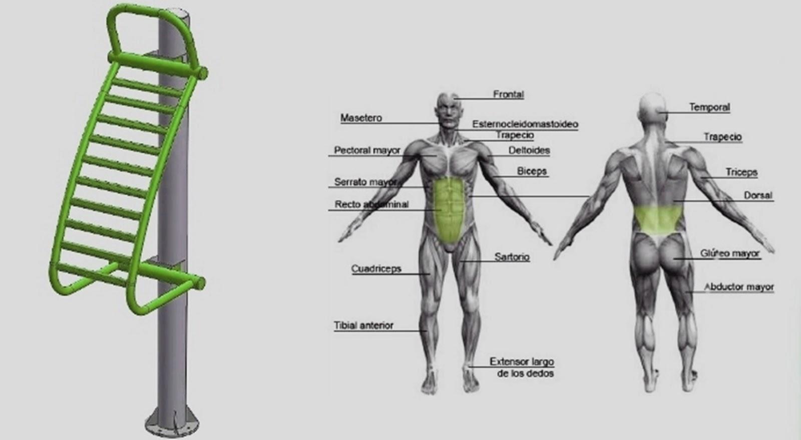 elongacion espalda: