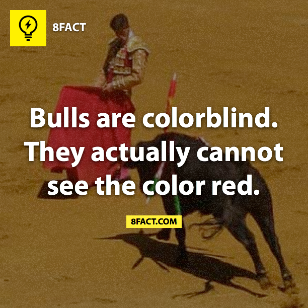 8fact , bulls are colorblind
