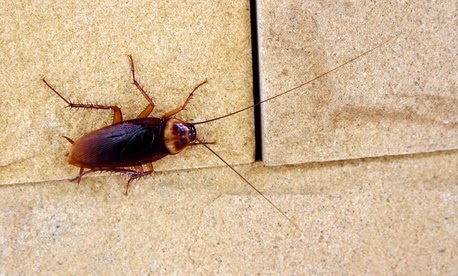 No One Wants To Shoulder The Blame When It Comes To A Roach Infestation At  Home. Admitting That Your House Or Apartment Has Roaches Is Like Pinning A  ...