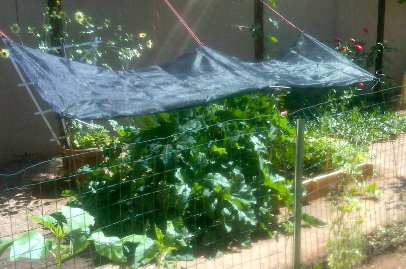 Hello There House Garden Seeds May Garden Checklist