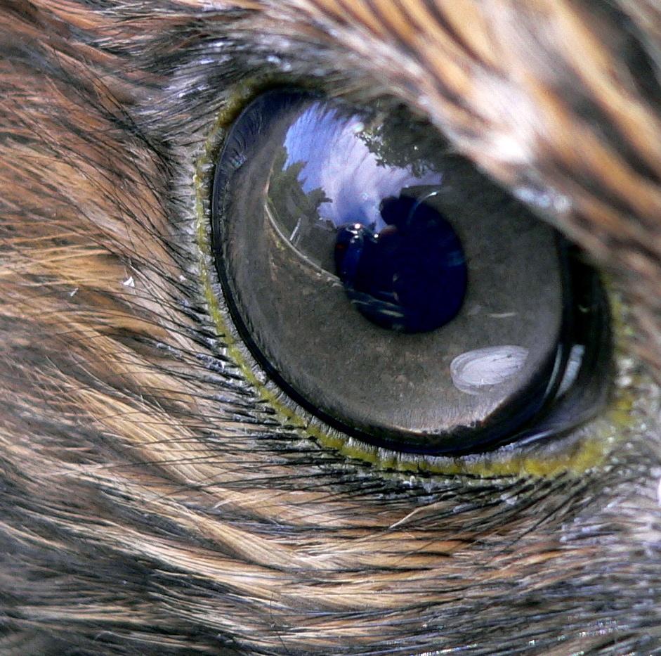 Eagles - Lyin  Eyes Yo...