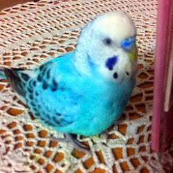 Os presento a Pedro, mi pájaro.