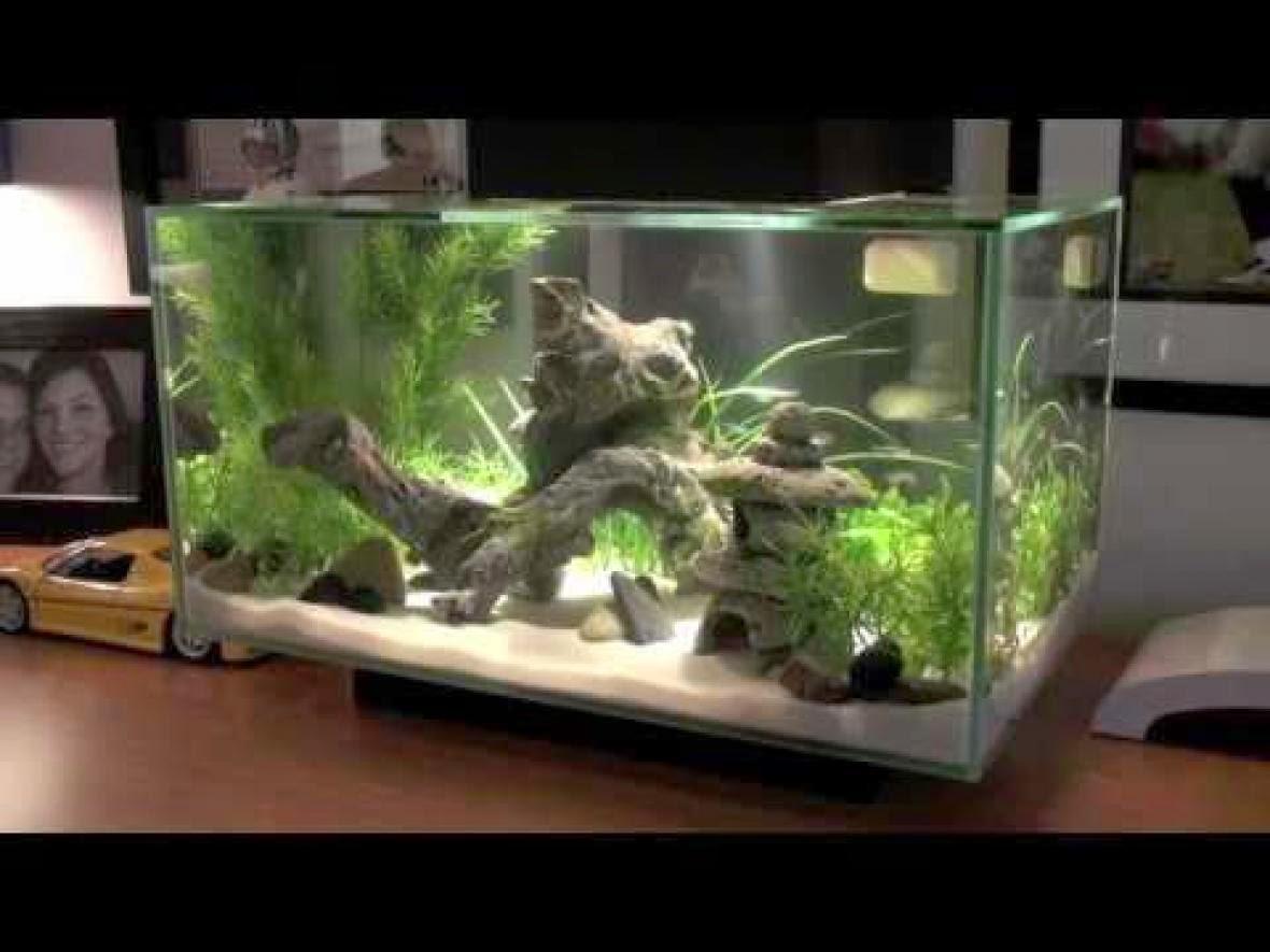 pirdot kumpulan foto aquarium aquascape keren