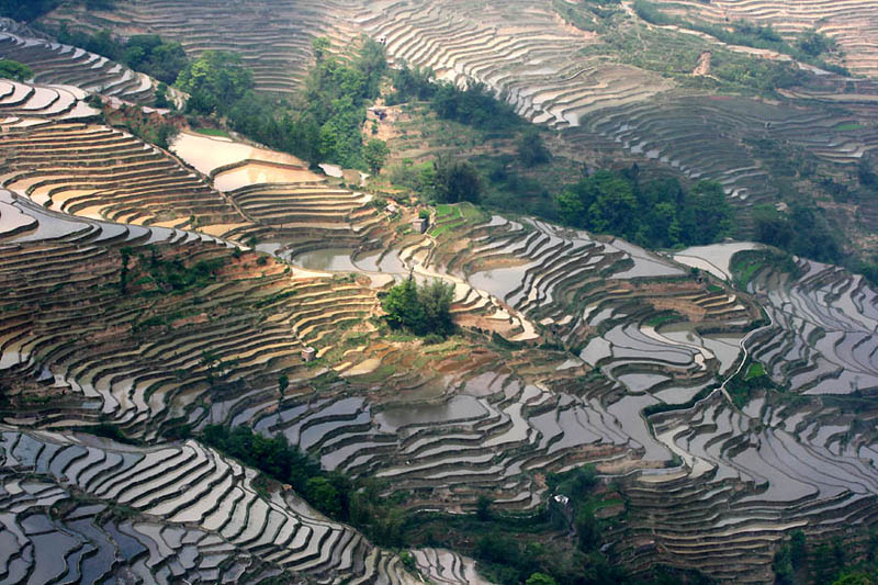 Terasasta polja  Pirincana-polja-15