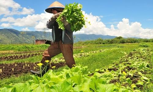 Info Pertanian Peternakan Distributor Pupuk Bersubsidi Provinsi Jambi