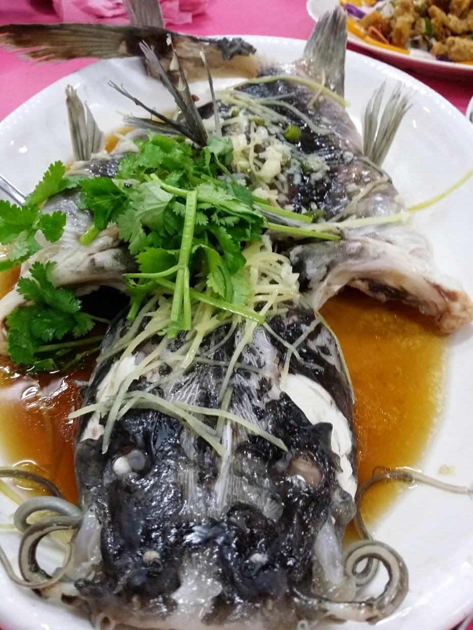 Xing fu white beard fish pak soe kung for Types of white fish to eat