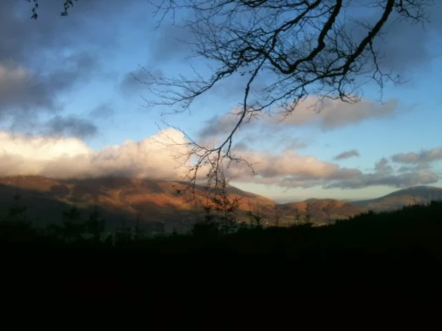 Fells from Whinlatter Forest