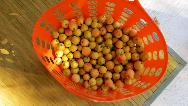 plastic laundry basket partially full of tiny yellow and red apples sitting on a bamboo mat