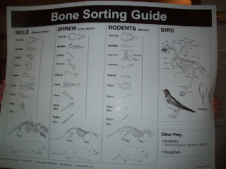 Owl Pellet Bone Sorting Guide