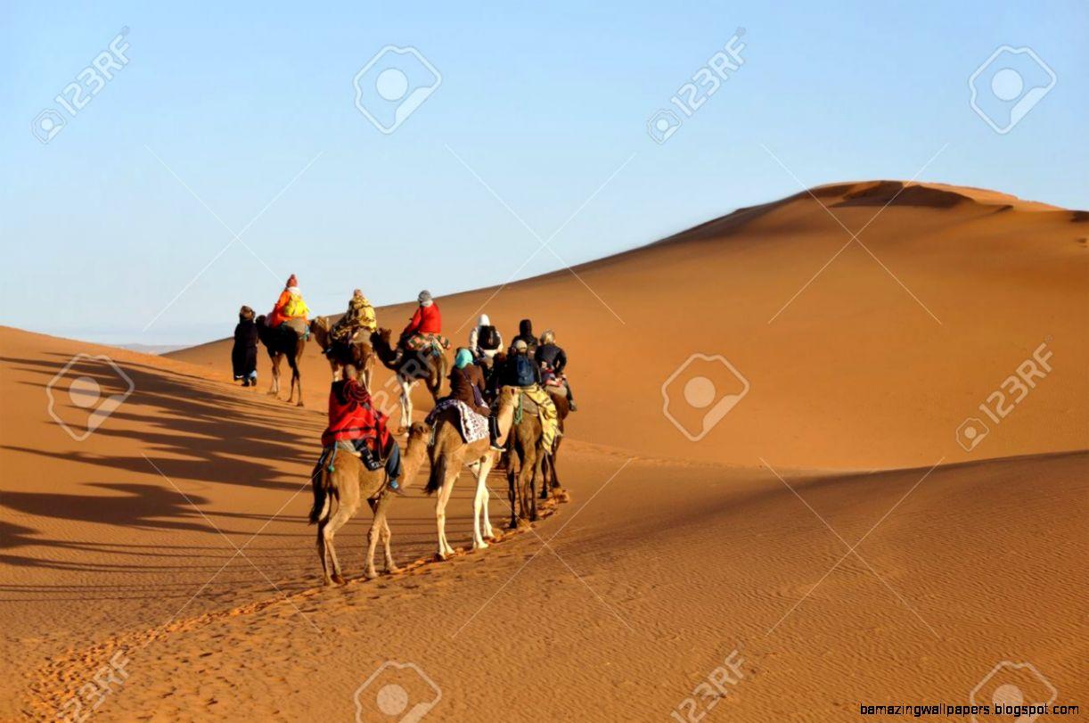 Camel Trip In Sahara Desert Merzouga Morocco North Africa Stock