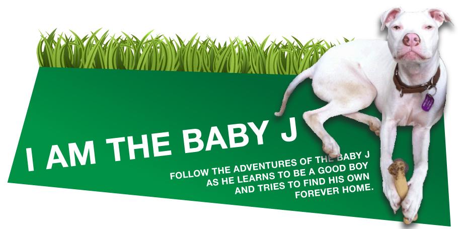 I am the Baby J (aka Peezy) and I need a home!!