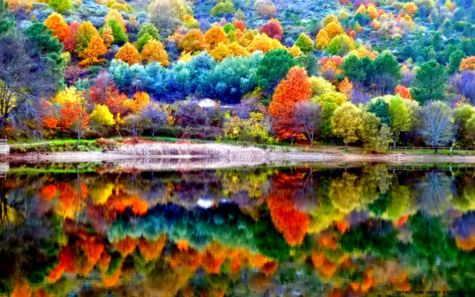 beautiful fall color reflected in lake photography nature hd