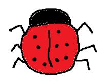 ladybird, ladybug, beetle, bug, insect