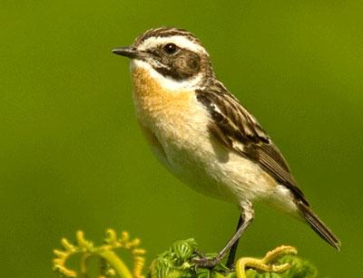 september 2011 kampung burung