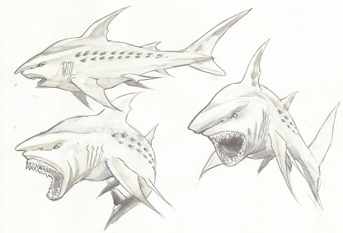 Pin Megalodon Coloring Pages On Pinterest Megalodon Shark Coloring Pages