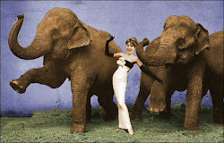 Palin of the Elephants