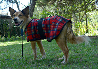 Plaid fleece blanket dog coat