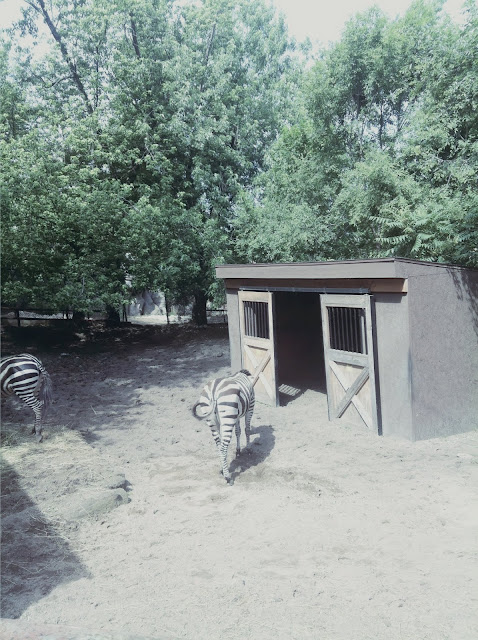 animals at Washington park zoo