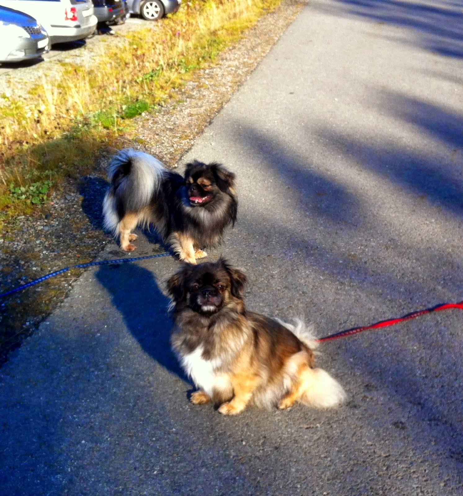 Kull med Tasha og Timon ventes rundt 18. oktober.