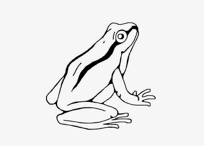 Tree frog coloring pages