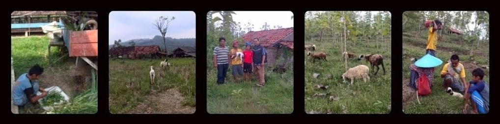 SOCIAL ENTREPRENEURSHIP @PeternakanSaKaDo, Perintisan Pemberdayaan Masyarakat Desa dengan Beternak