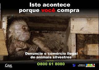 campanha do Ibama contra o tráfico de animais silvestres - Isto acontece porque você compra