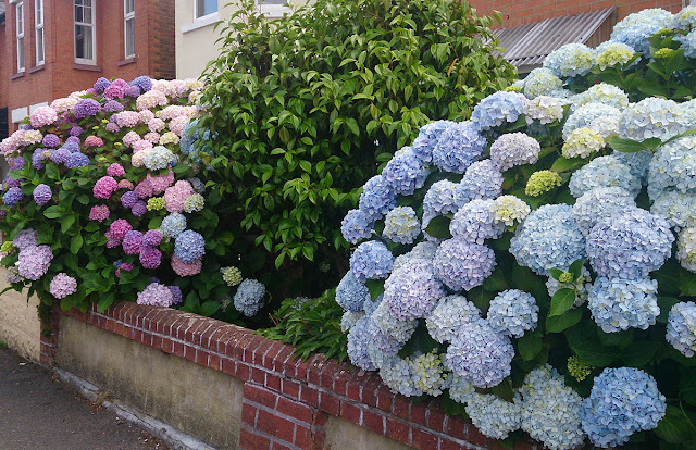 things-to-do-hydrangea-garden-todaymyway.com