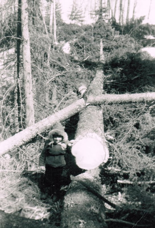 Michael Demoskoff standing beside a felled spruce tree 1958