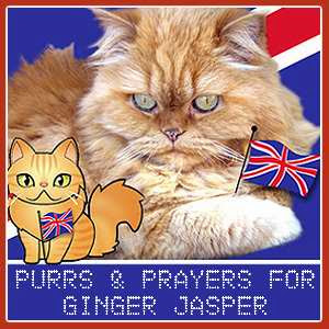 Purrs for Ginger Jasper