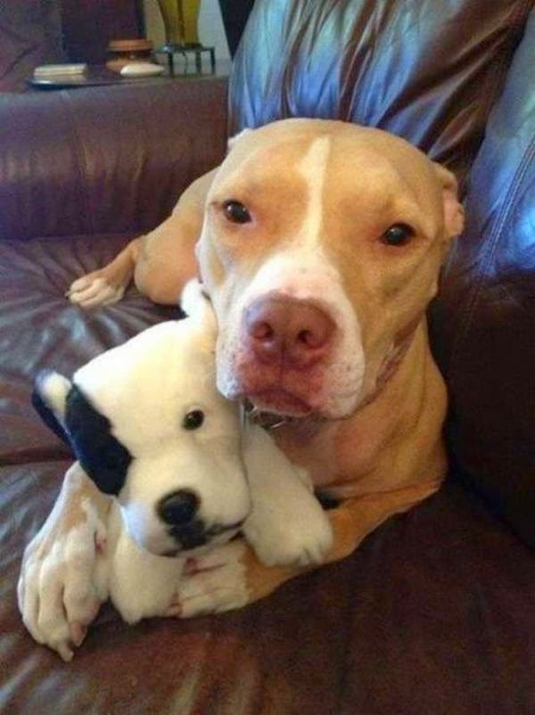 Cute dogs - part 45 (50 pics), funny dog picture, dog photos