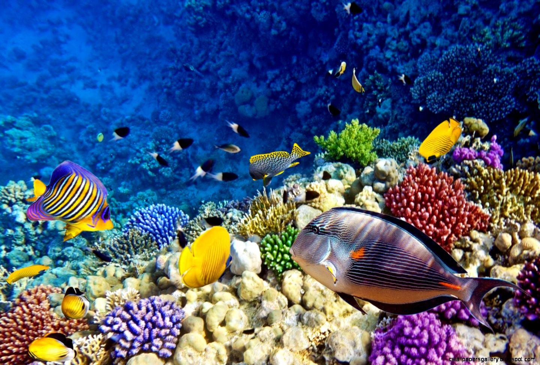 c reef images