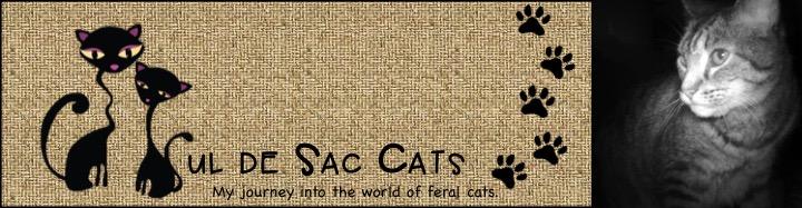 Cul de Sac Cats
