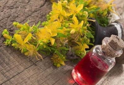 Aceite de hierba de San Juan - un remedio natural para muchas enfermedades.