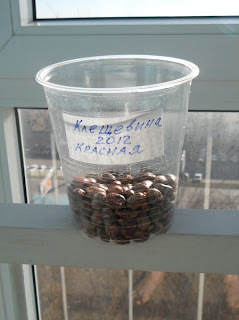 10 декабря, семена клещевины на хранении